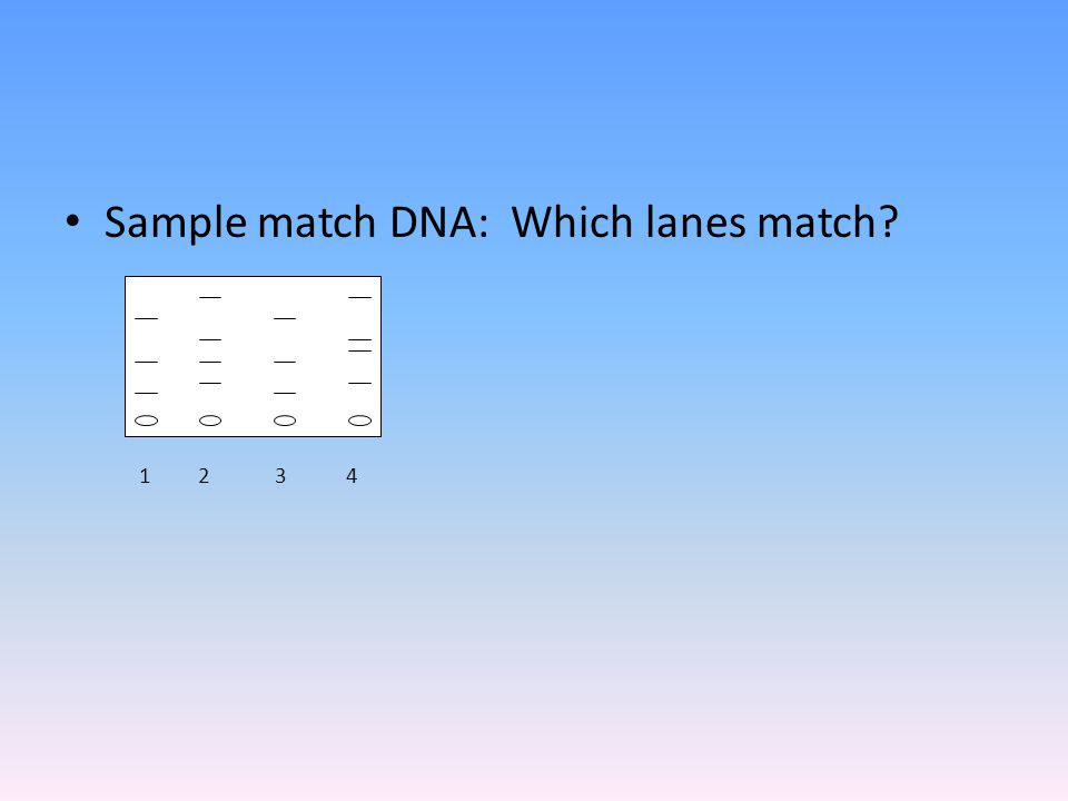 Sample match DNA: Which lanes match 1 2 3 4