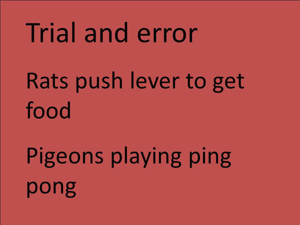 Trial and error Rats push lever to get food Pigeons playing ping pong