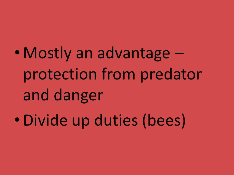 Mostly an advantage – protection from predator and danger Divide up duties (bees)