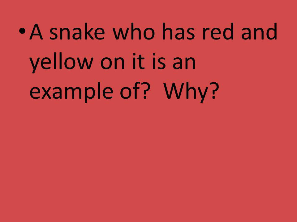 A snake who has red and yellow on it is an example of Why
