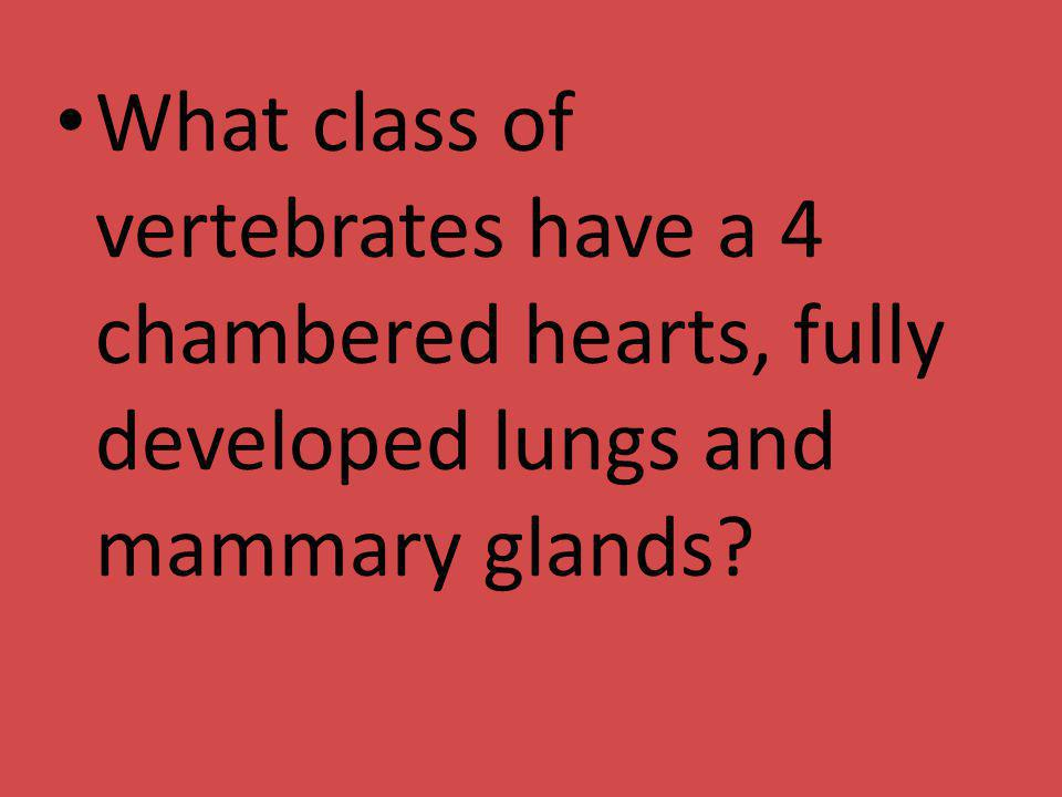 What class of vertebrates have a 4 chambered hearts, fully developed lungs and mammary glands