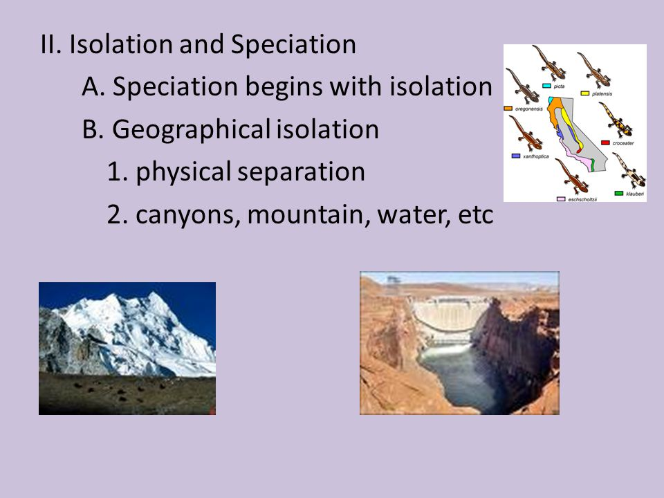 II. Isolation and Speciation A. Speciation begins with isolation B. Geographical isolation 1. physical separation 2. canyons, mountain, water, etc