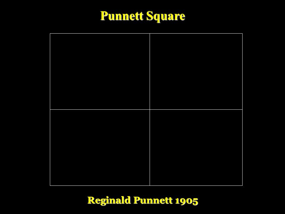 III.Reginald Punnett and the Punnett Squares A.English Biologist B. 1905: devised a shorthand way of finding the expected proportions of possible geno