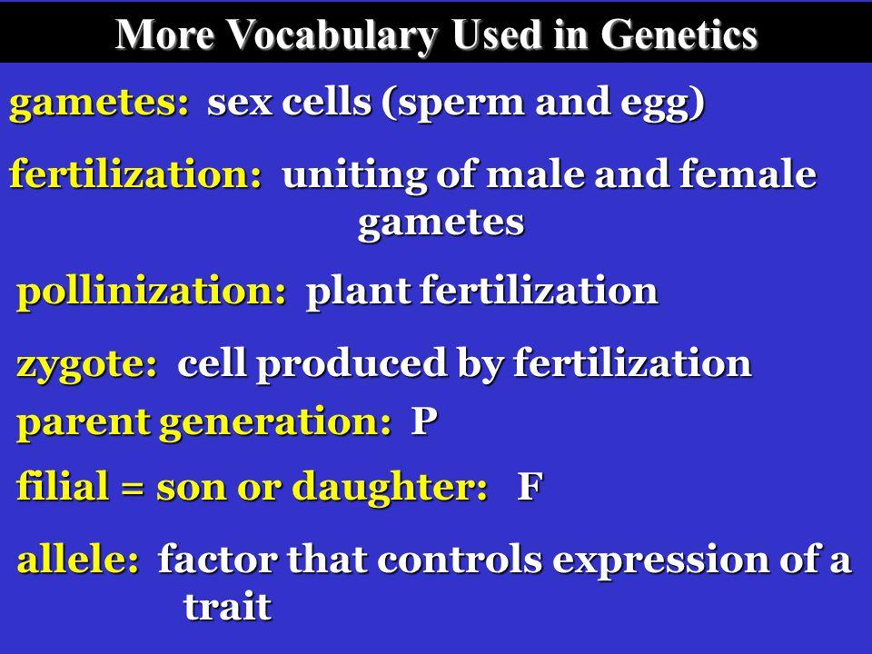 More Vocabulary Used in Genetics traits: inherited characteristics genetics: study of heredity heredity: passing characteristics from parents to offsp