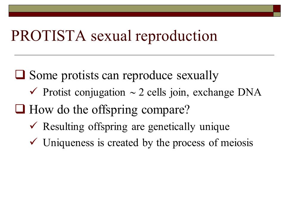 PROTISTA sexual reproduction  Some protists can reproduce sexually Protist conjugation  2 cells join, exchange DNA  How do the offspring compare.