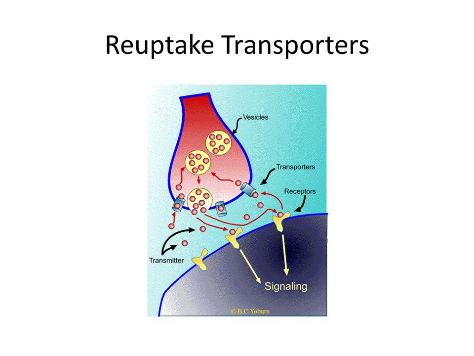 Reuptake Transporters