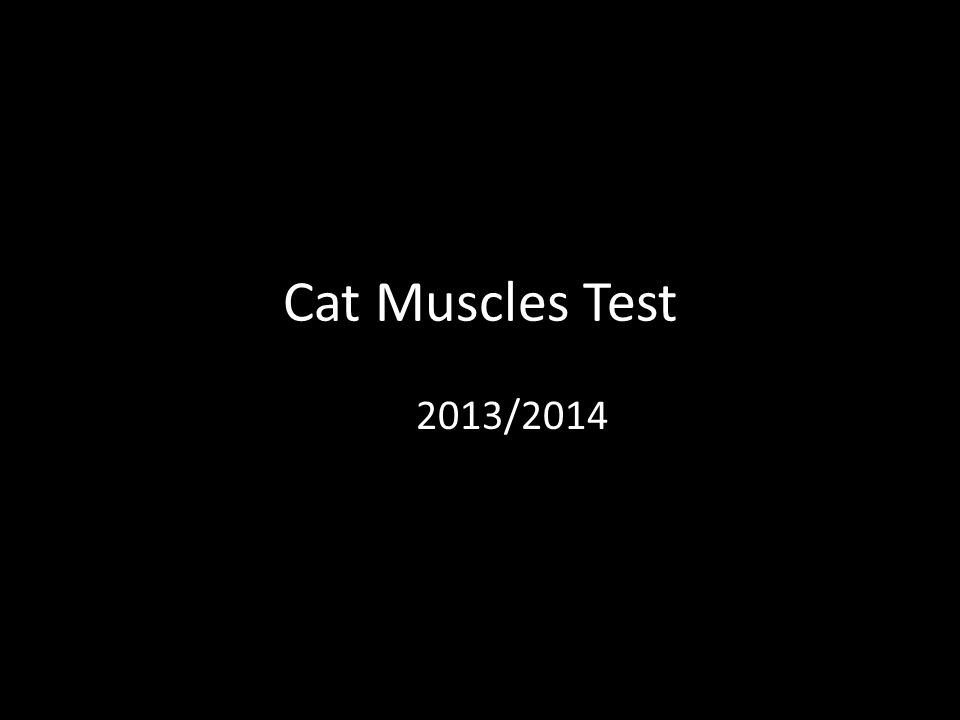 Cat Muscles Test 2013/2014