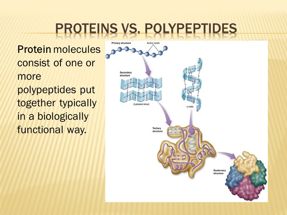 Protein molecules consist of one or more polypeptides put together typically in a biologically functional way.