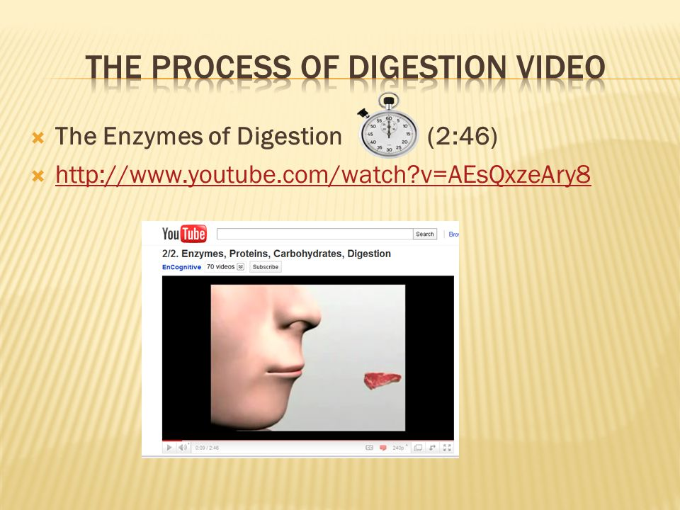  The Enzymes of Digestion (2:46)  http://www.youtube.com/watch?v=AEsQxzeAry8 http://www.youtube.com/watch?v=AEsQxzeAry8