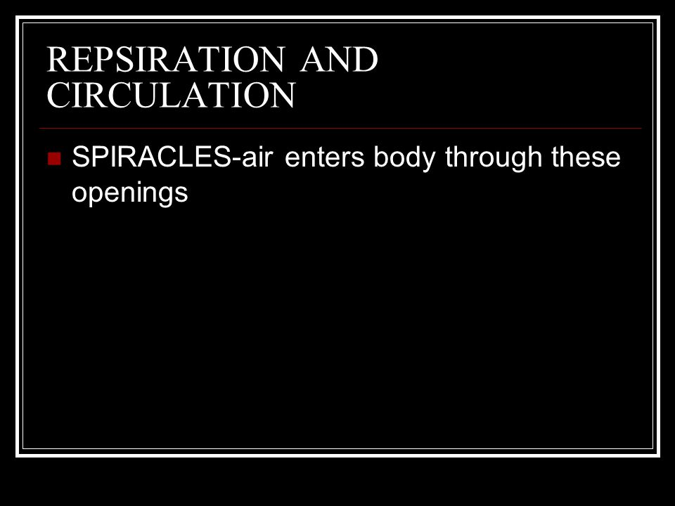 REPSIRATION AND CIRCULATION SPIRACLES-air enters body through these openings TRACHEA-tubes there air travels from spiracles to bloodstream