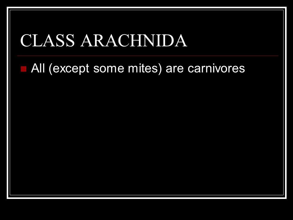 CLASS ARACHNIDA All (except some mites) are carnivores Most terrestrial