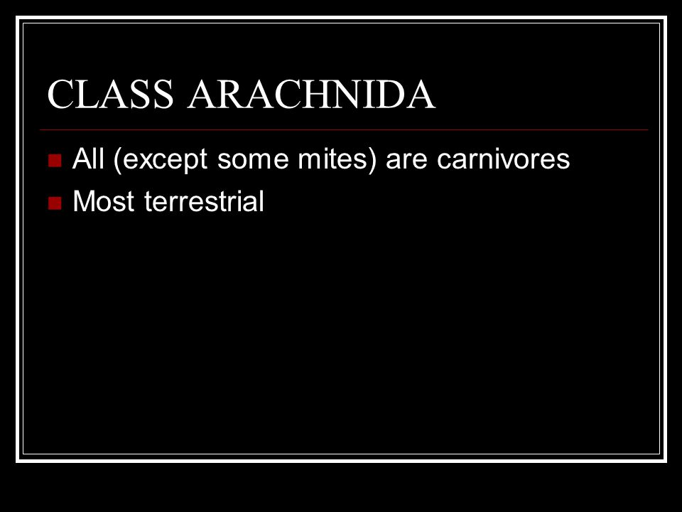 CLASS ARACHNIDA All (except some mites) are carnivores Most terrestrial Don't have jaws (consume only liquid food)
