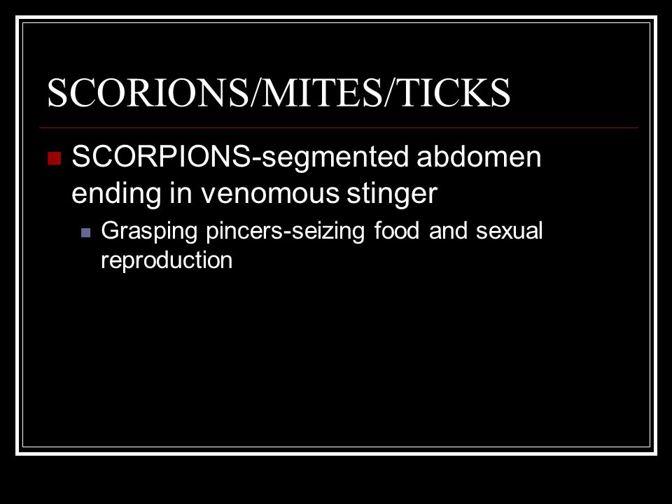 SCORIONS/MITES/TICKS SCORPIONS-segmented abdomen ending in venomous stinger Grasping pincers-seizing food and sexual reproduction MITES/TICKS-head, thorax and abdomen fused into single unsegmented body Most not harmful Can spread viral/fungal infections (ex.