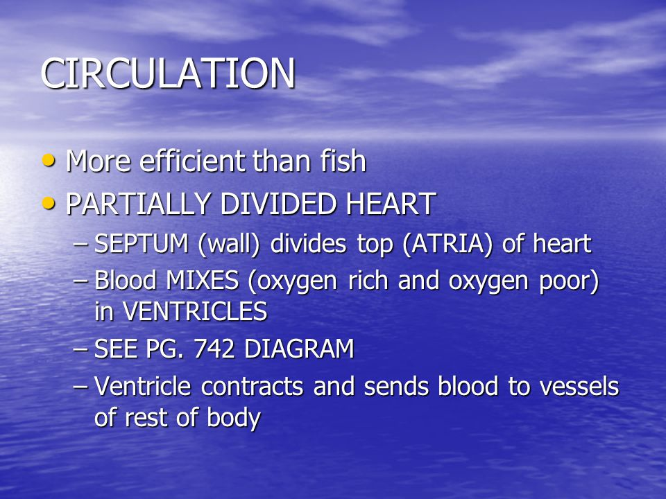 CIRCULATION More efficient than fish More efficient than fish PARTIALLY DIVIDED HEART PARTIALLY DIVIDED HEART –SEPTUM (wall) divides top (ATRIA) of he