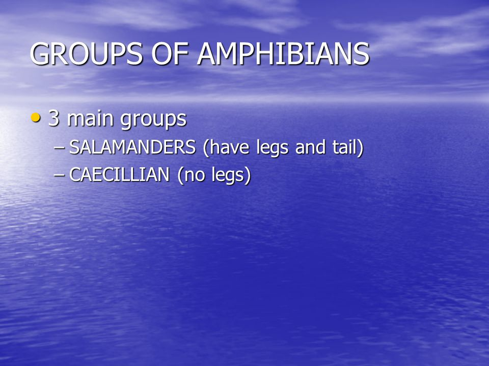 GROUPS OF AMPHIBIANS 3 main groups 3 main groups –SALAMANDERS (have legs and tail) –CAECILLIAN (no legs)