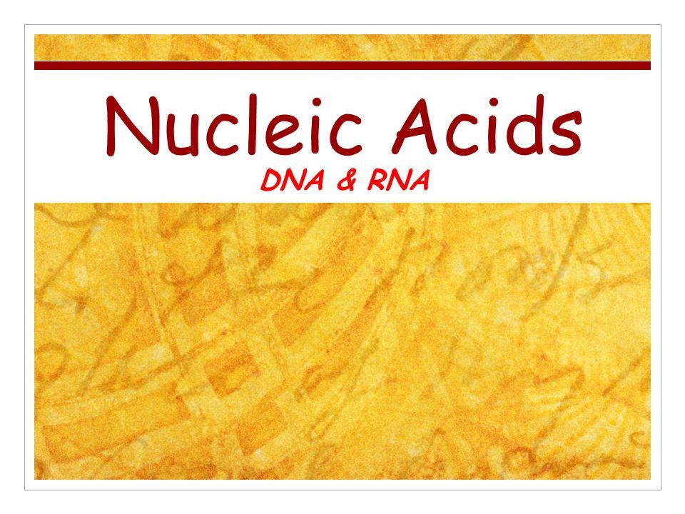Nucleic Acids DNA & RNA