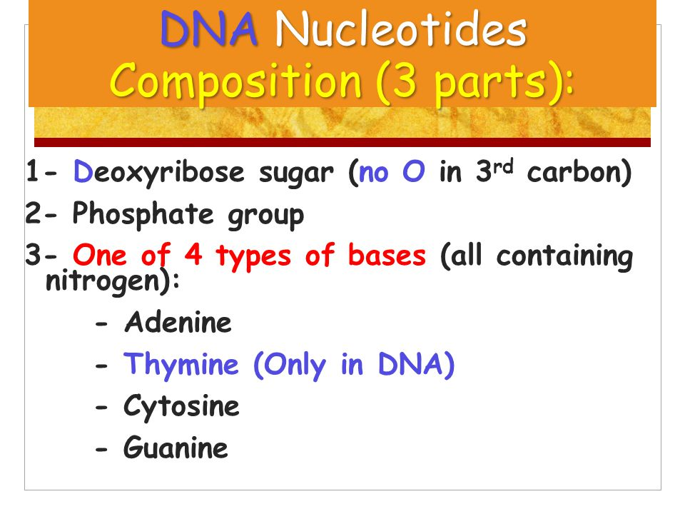 DNA Nucleotides Composition (3 parts): 1- Deoxyribose sugar (no O in 3 rd carbon) 2- Phosphate group 3- One of 4 types of bases (all containing nitrog