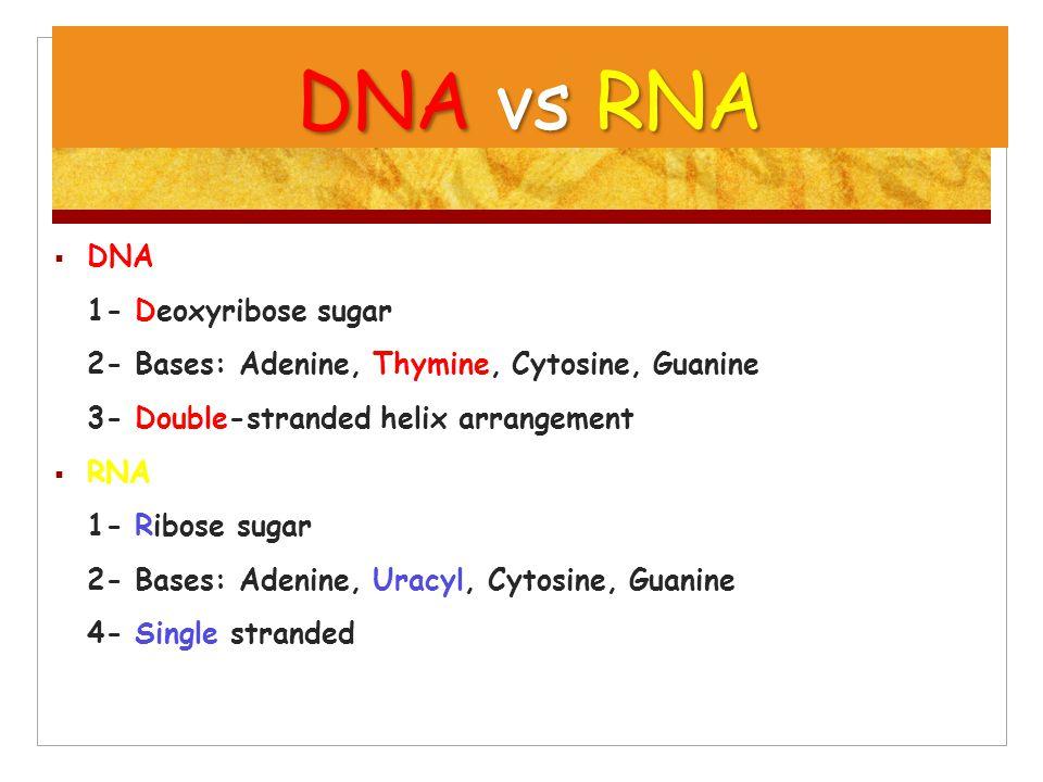DNA vs RNA  DNA 1- Deoxyribose sugar 2- Bases: Adenine, Thymine, Cytosine, Guanine 3- Double-stranded helix arrangement  RNA 1- Ribose sugar 2- Base