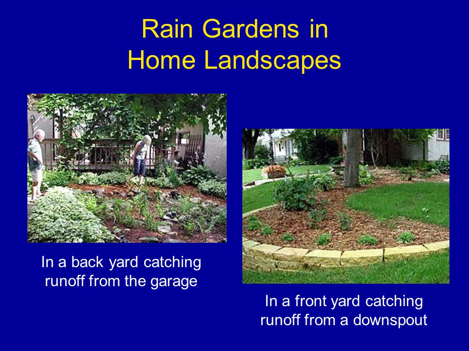 Rain Gardens in Home Landscapes In a back yard catching runoff from the garage In a front yard catching runoff from a downspout