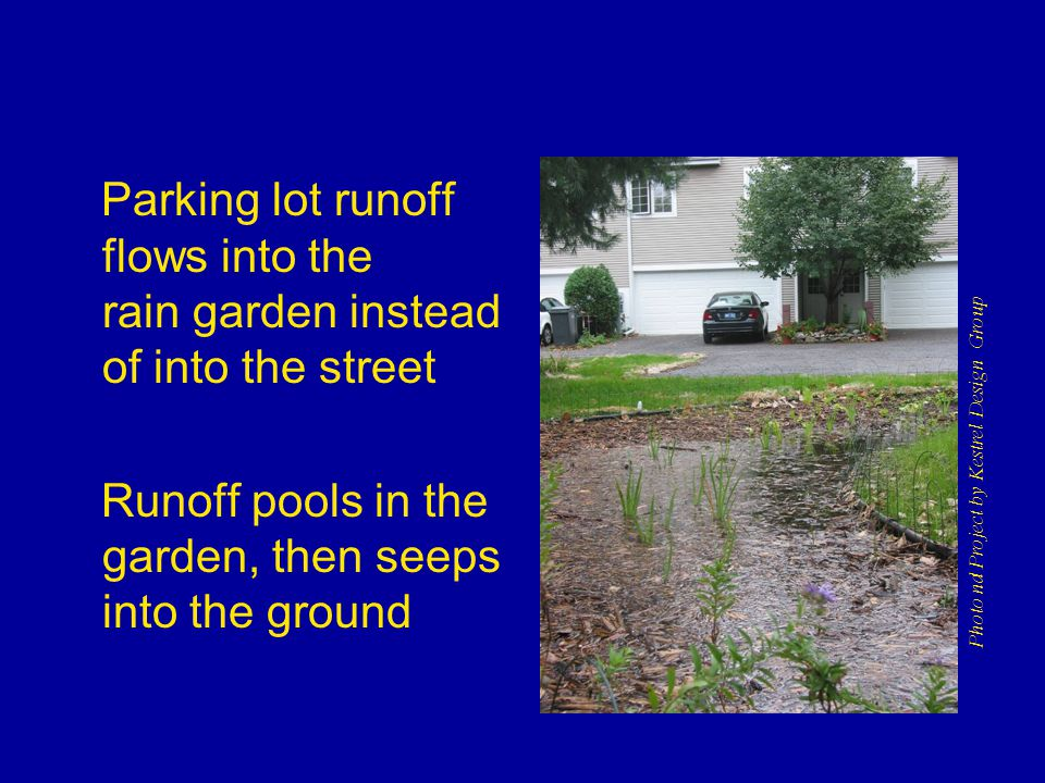 Parking lot runoff flows into the rain garden instead of into the street Runoff pools in the garden, then seeps into the ground Photo nd Project by Kestrel Design Group