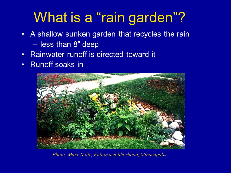 What is a rain garden .