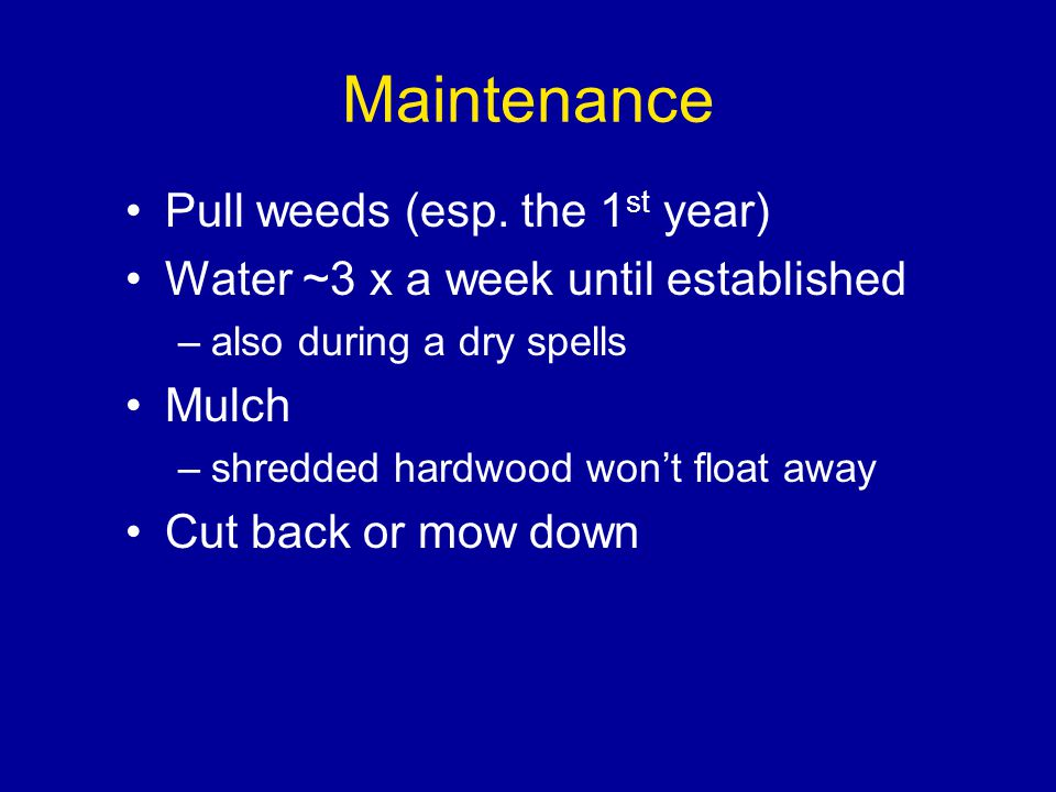 Maintenance Pull weeds (esp.