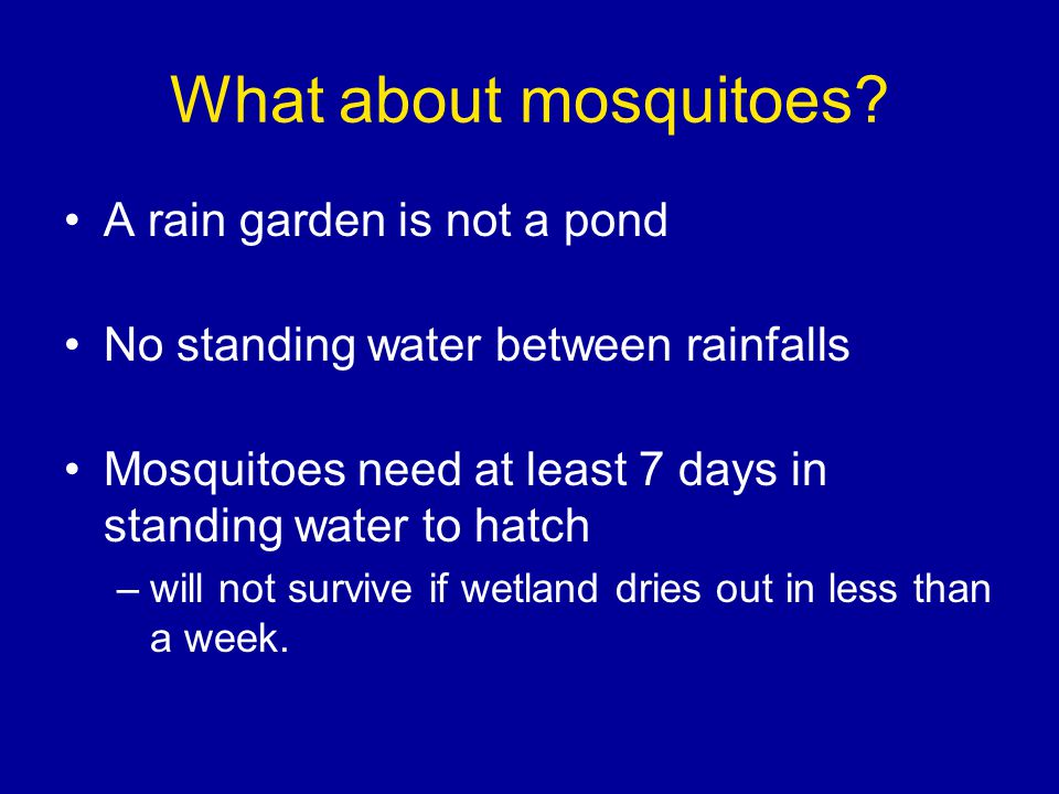 What about mosquitoes.