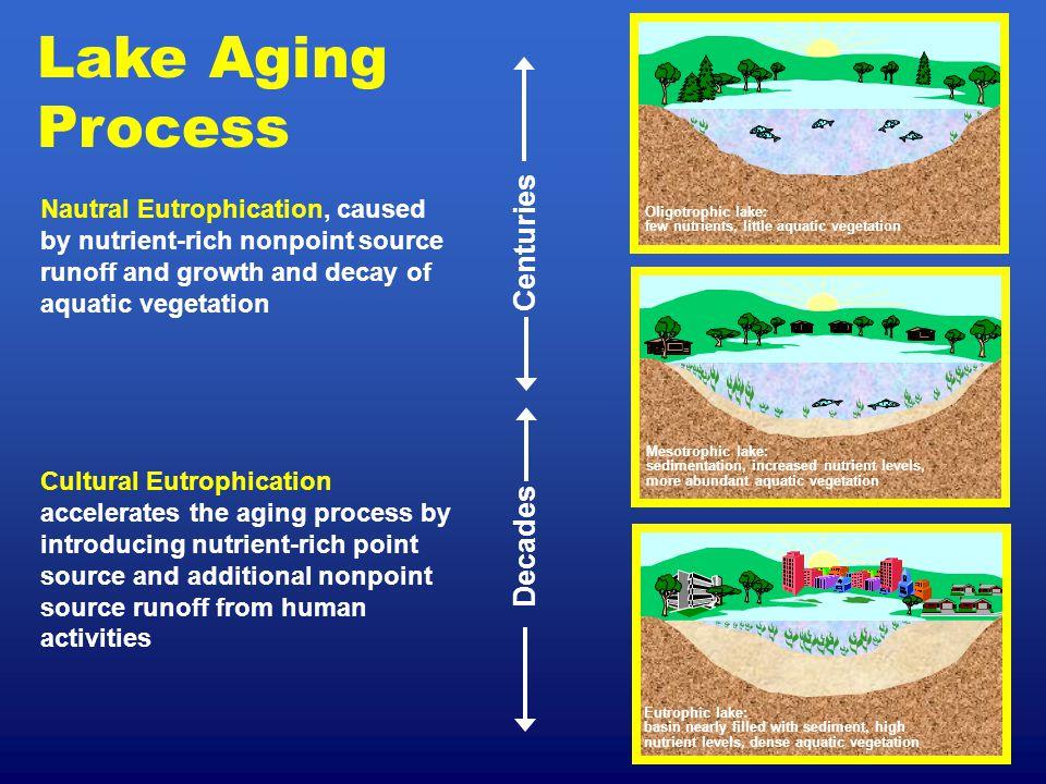 Lake Aging Process Mesotrophic lake: sedimentation, increased nutrient levels, more abundant aquatic vegetation Oligotrophic lake: few nutrients, litt