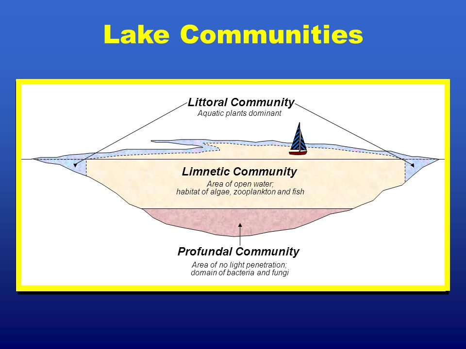 Lake Communities Limnetic Community Profundal Community Area of open water; habitat of algae, zooplankton and fish Area of no light penetration; domai