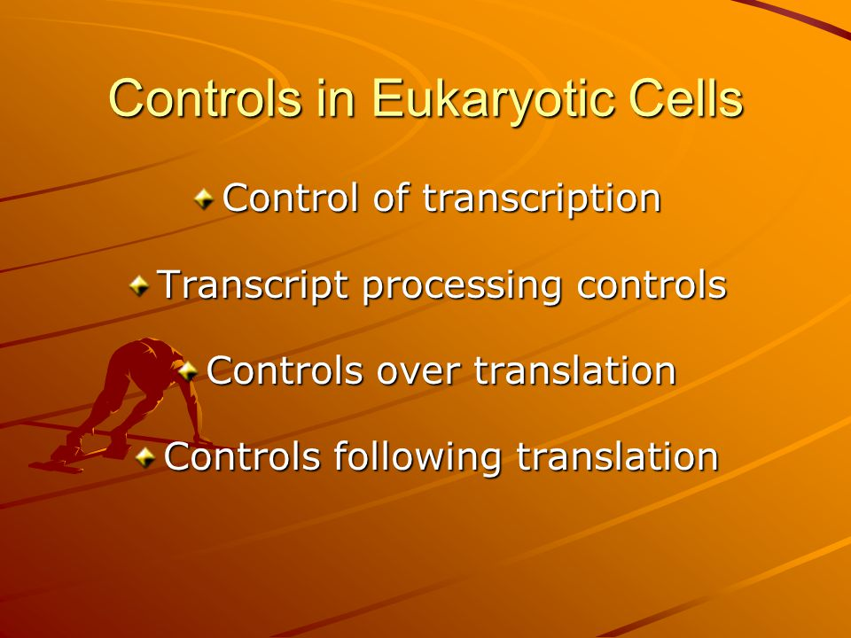 Controls in Eukaryotic Cells Control of transcription Transcript processing controls Controls over translation Controls following translation