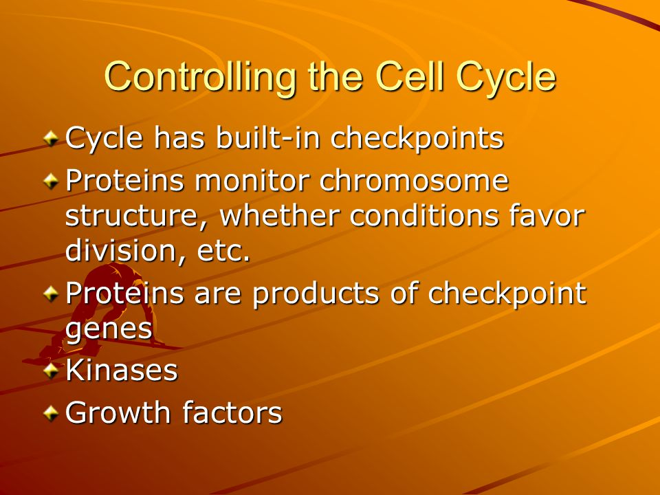 Controlling the Cell Cycle Cycle has built-in checkpoints Proteins monitor chromosome structure, whether conditions favor division, etc. Proteins are