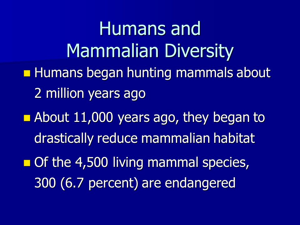 Humans and Mammalian Diversity Humans began hunting mammals about 2 million years ago Humans began hunting mammals about 2 million years ago About 11,000 years ago, they began to drastically reduce mammalian habitat About 11,000 years ago, they began to drastically reduce mammalian habitat Of the 4,500 living mammal species, 300 (6.7 percent) are endangered Of the 4,500 living mammal species, 300 (6.7 percent) are endangered