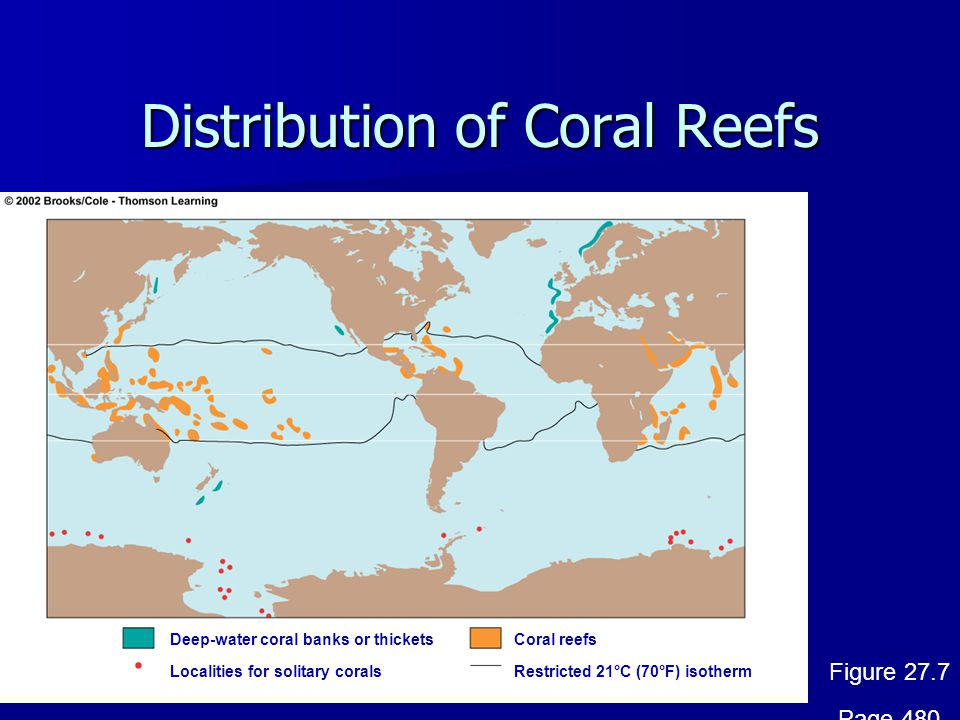 Distribution of Coral Reefs Coral reefs Localities for solitary corals Deep-water coral banks or thickets Restricted 21°C (70°F) isotherm Figure 27.7 Page 480