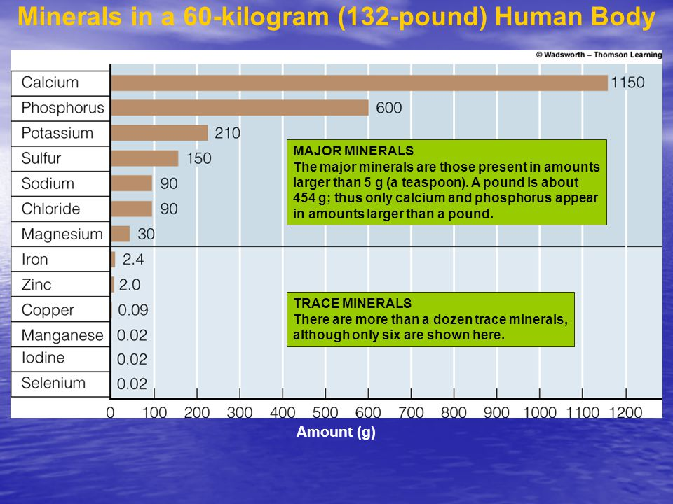 Minerals in a 60-kilogram (132-pound) Human Body TRACE MINERALS There are more than a dozen trace minerals, although only six are shown here.