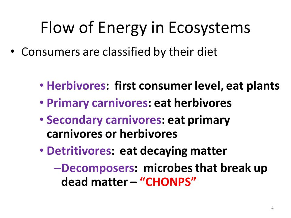 4 Consumers are classified by their diet Herbivores: first consumer level, eat plants Primary carnivores: eat herbivores Secondary carnivores: eat primary carnivores or herbivores Detritivores: eat decaying matter – Decomposers: microbes that break up dead matter – CHONPS Flow of Energy in Ecosystems