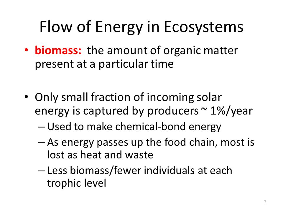 7 biomass: the amount of organic matter present at a particular time Only small fraction of incoming solar energy is captured by producers ~ 1%/year –