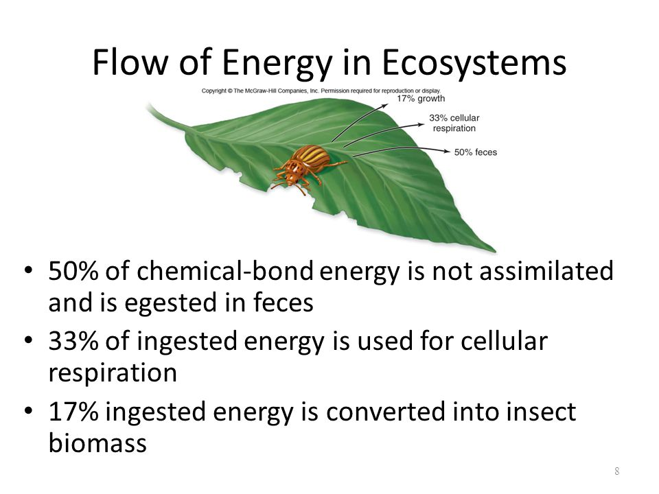 8 50% of chemical-bond energy is not assimilated and is egested in feces 33% of ingested energy is used for cellular respiration 17% ingested energy i