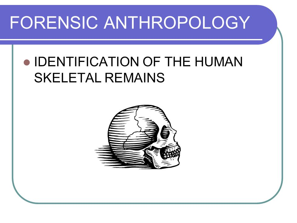 FORENSIC ANTHROPOLOGY IDENTIFICATION OF THE HUMAN SKELETAL REMAINS