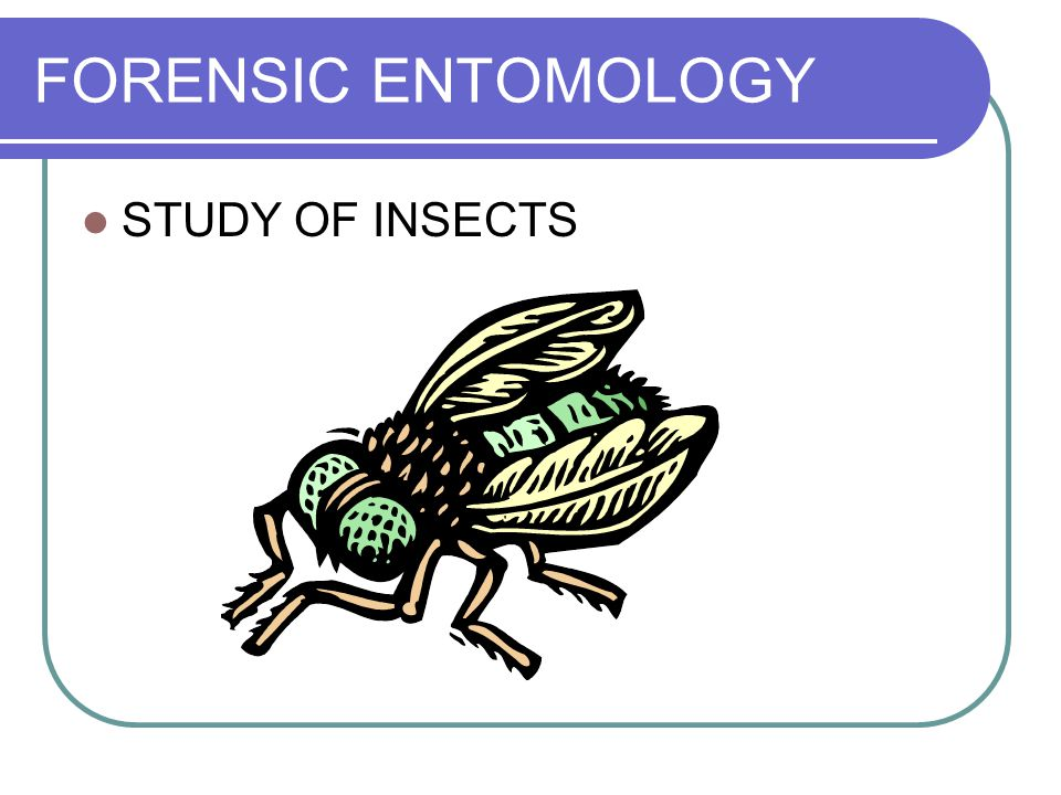 FORENSIC ENTOMOLOGY STUDY OF INSECTS