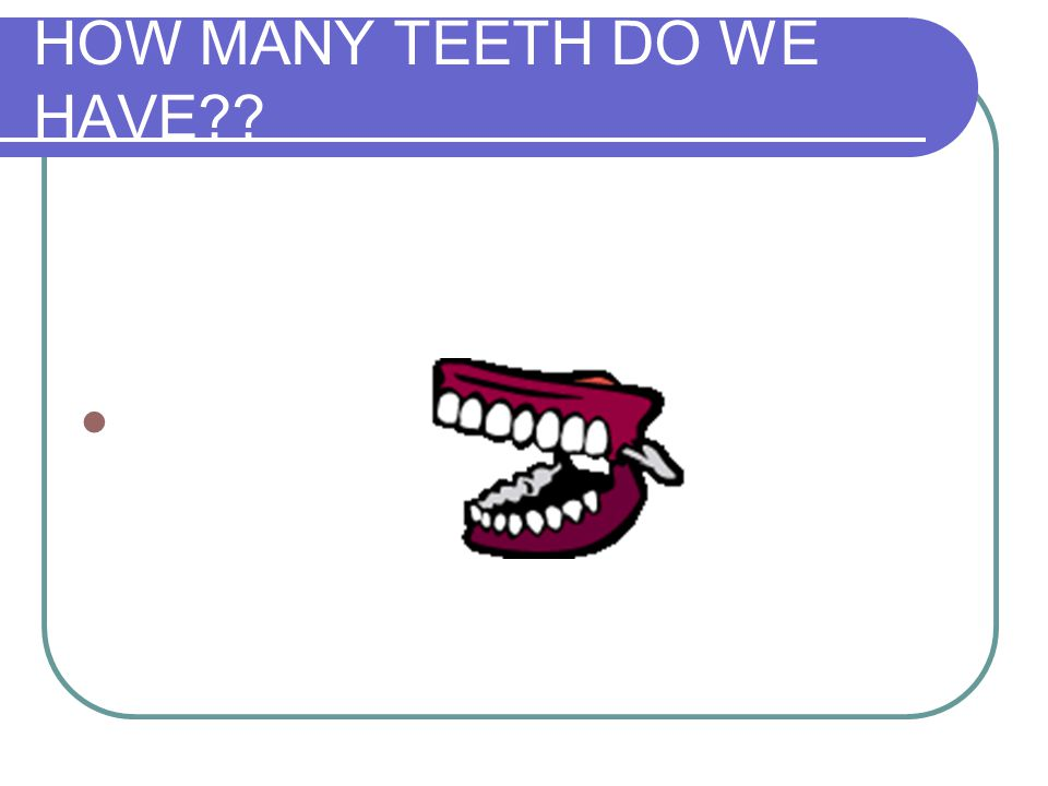 HOW MANY TEETH DO WE HAVE??