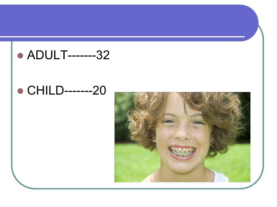 ADULT-------32 CHILD-------20