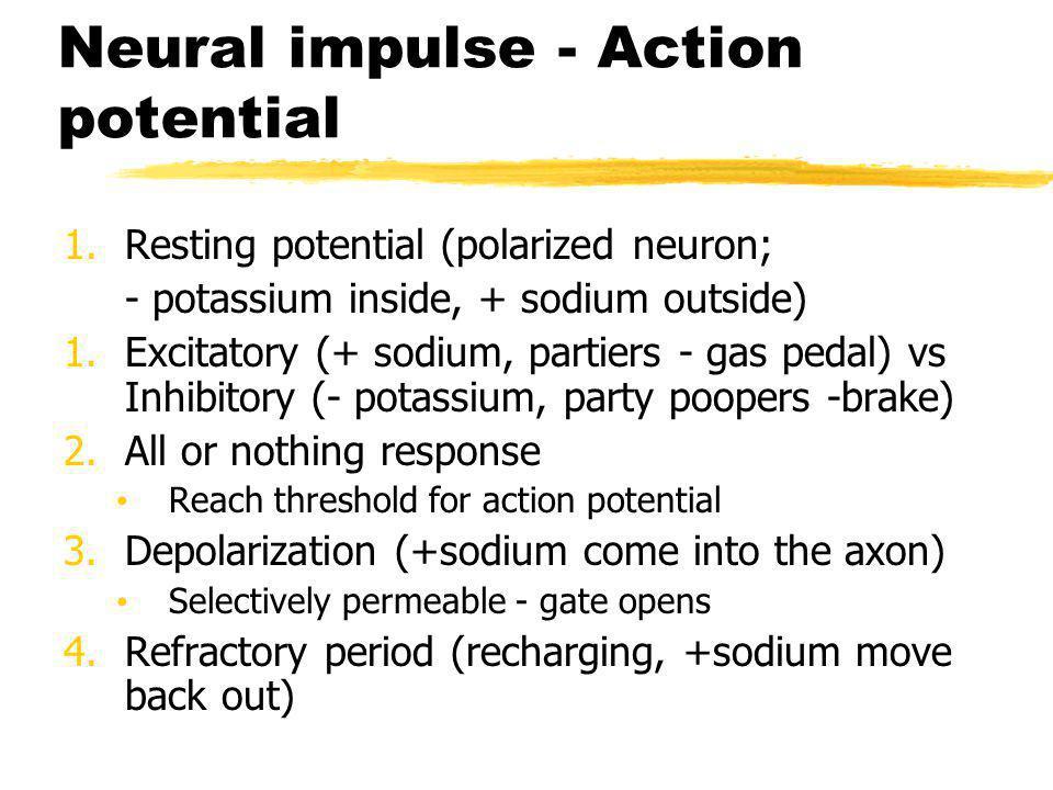 Neural Communication Cell body end of axon Direction of neural impulse: toward axon terminals