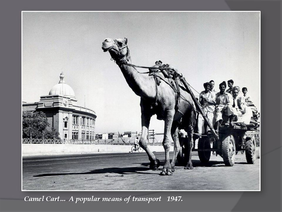 Camel Cart… A popular means of transport 1947.