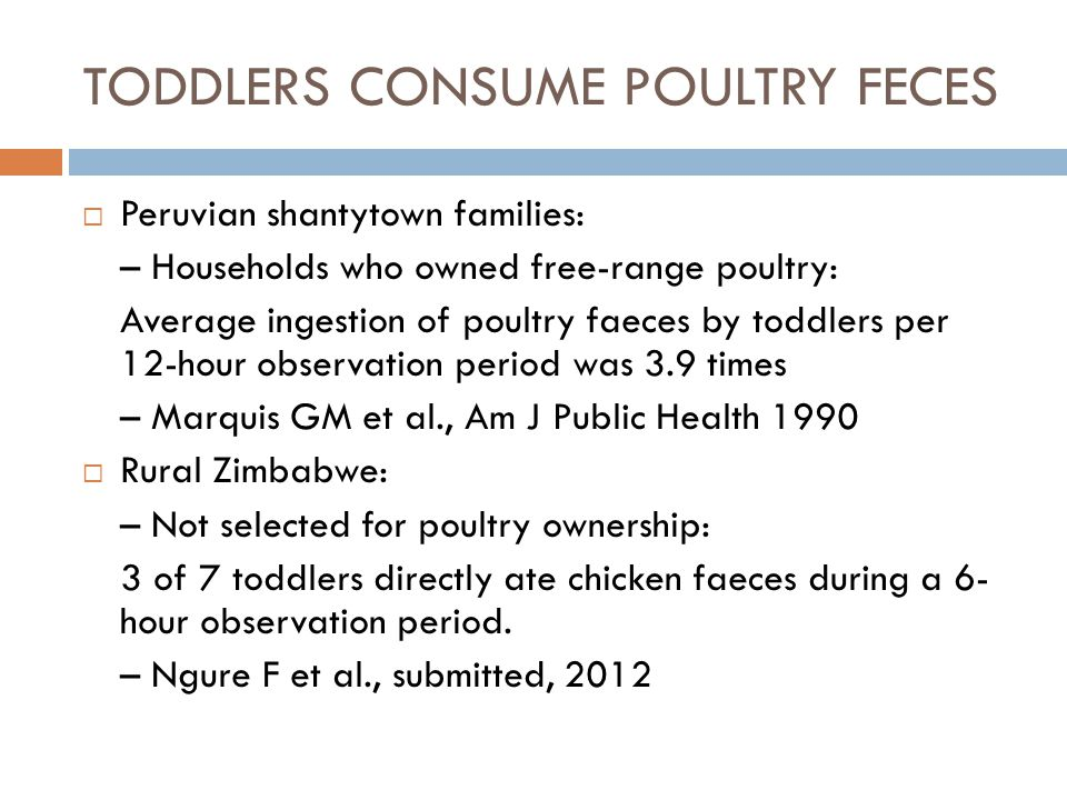 TODDLERS CONSUME POULTRY FECES  Peruvian shantytown families: – Households who owned free-range poultry: Average ingestion of poultry faeces by toddlers per 12-hour observation period was 3.9 times – Marquis GM et al., Am J Public Health 1990  Rural Zimbabwe: – Not selected for poultry ownership: 3 of 7 toddlers directly ate chicken faeces during a 6- hour observation period.