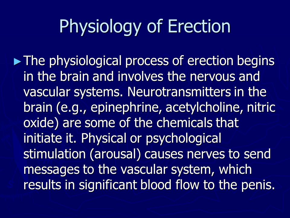 Physiology of Erection ► The physiological process of erection begins in the brain and involves the nervous and vascular systems. Neurotransmitters in
