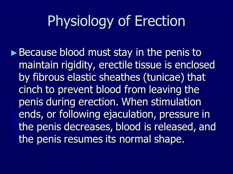 Physiology of Erection ► Because blood must stay in the penis to maintain rigidity, erectile tissue is enclosed by fibrous elastic sheathes (tunicae)