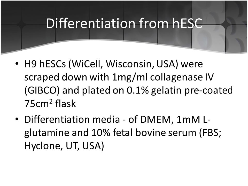 Differentiation from hESC H9 hESCs (WiCell, Wisconsin, USA) were scraped down with 1mg/ml collagenase IV (GIBCO) and plated on 0.1% gelatin pre-coated 75cm 2 flask Differentiation media - of DMEM, 1mM L- glutamine and 10% fetal bovine serum (FBS; Hyclone, UT, USA)