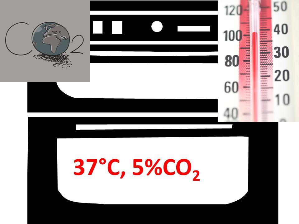 37°C, 5%CO 2