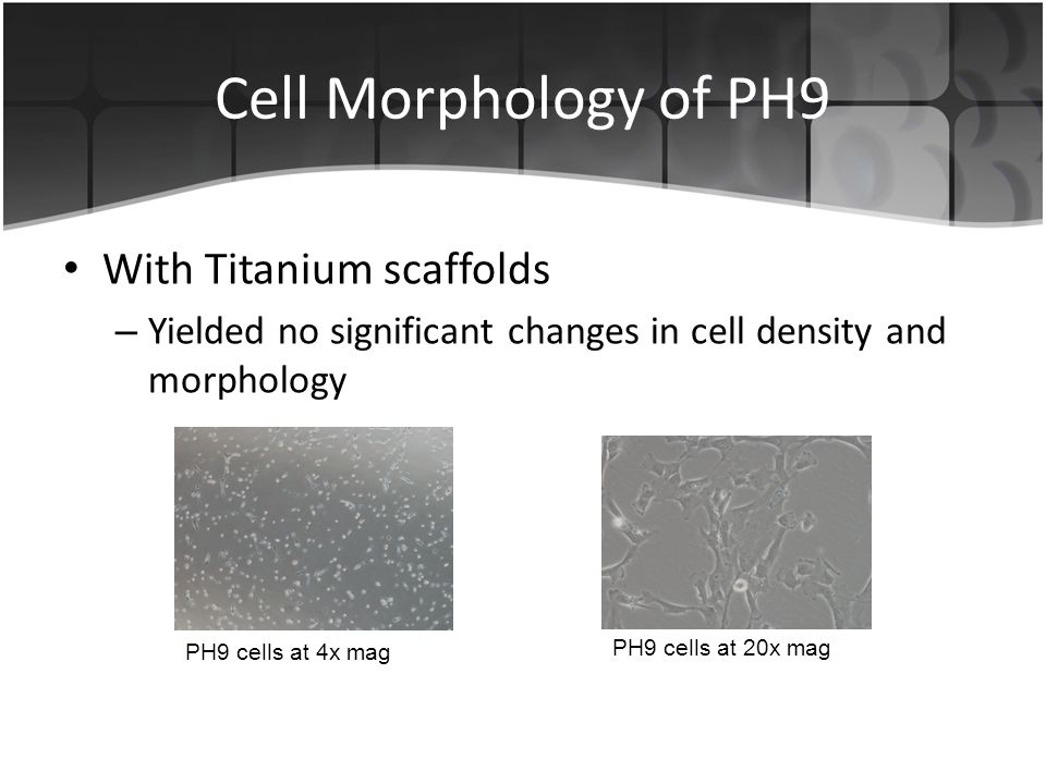 Cell Morphology of PH9 With Titanium scaffolds – Yielded no significant changes in cell density and morphology PH9 cells at 4x mag PH9 cells at 20x mag