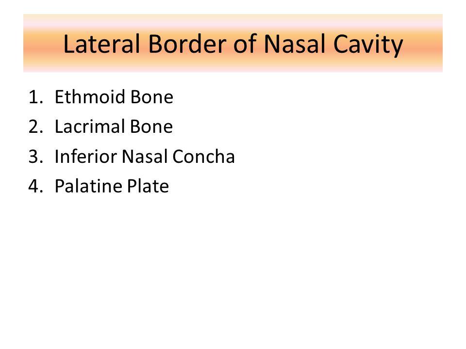 Lateral Border of Nasal Cavity 1.Ethmoid Bone 2.Lacrimal Bone 3.Inferior Nasal Concha 4.Palatine Plate